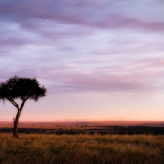 Colors of the Mara