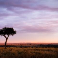 Colors of the Mara