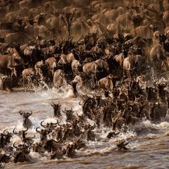 Migration 3